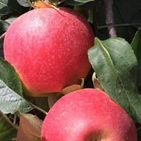 Shanesville Fruit Farm