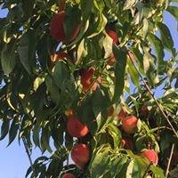 Gardiner's Orchard LLC