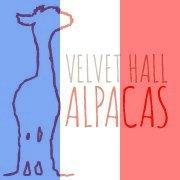 Velvet Hall Alpacas