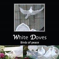 Weddings White dove