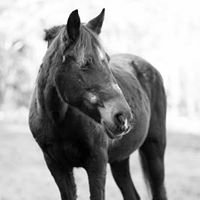 Hope's Legacy Equine Rescue