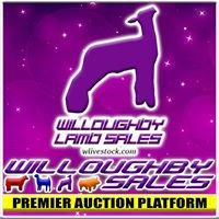 Willoughby Sheep Sales