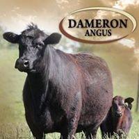 Dameron Angus Farms