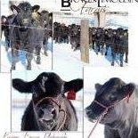 Braun Limousin Farms