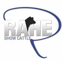 Rahe Show Cattle