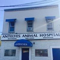 Antelyes Animal Hospital