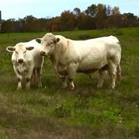 Faraway Cattle Company