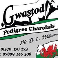 Gwastod Charolais  www.gwastod.co.uk