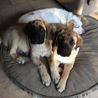 Brooklyn Veterinary Group