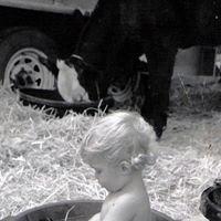 Henson Livestock