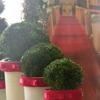 Wypożyczalnia  Roślin Dekoracyjnych