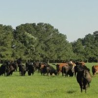 Columbus County Cattlemen's Association