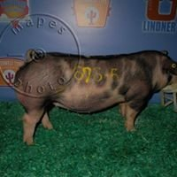 Wehner Farms Showpigs