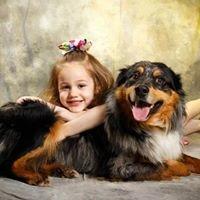 Rolling Meadows Academy of Dog Training, LLC