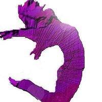 Momentum School of Dance