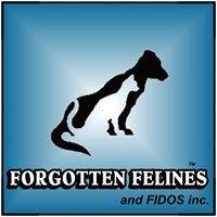 Forgotten Felines and Fidos