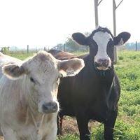 Shike Cattle Company
