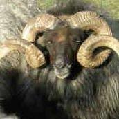 Sunrise Sheep & Wool