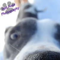 Wet Nose Photography
