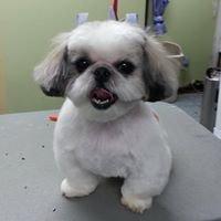 Terry's Top Dog Pet Salon