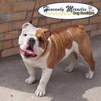 Heavenly Miracles Dog Boutique