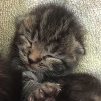 Last Chance Animal Rescue's Bottle Baby Project