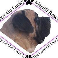Happy Go Lucky Mastiff Rescue