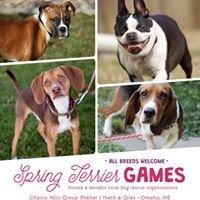 Spring Terrier Games