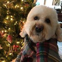 Bark-a-Lounge Pet Salon