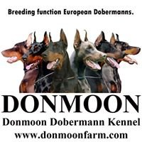 Donmoon Dobermann Kennel
