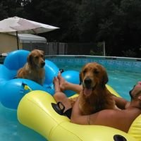 West Coast Doberman & Golden Retriever Kennels