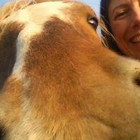 Helen Spence Horse Sense