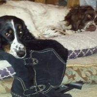 Fancy Coats Pet Grooming & Inn