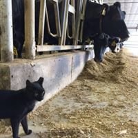 "Leedle Farms ""Black Cat Dairy"""