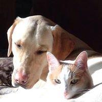 Starch Pet Hospital & University West Pet Clinic