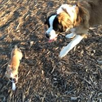 Bassett Creek Dog Park