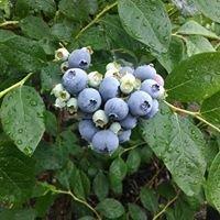 Haines Berry Farm
