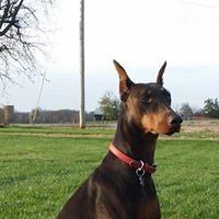 Doberman Pinscher Club of Nashville