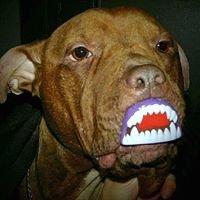 Sophie's Dog Adoption