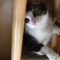Pets Abandoned Wanting Support