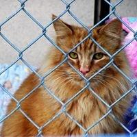 Kitimat Humane Society