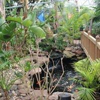Tropic Bay Water Gardens