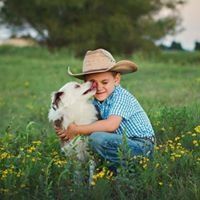 Cheyenne Star Miniature and Toy Australian Shepherds