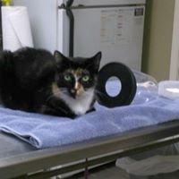 Highlands Animal Hospital