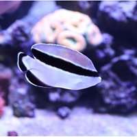 Wasatch Marine Aquarium Society