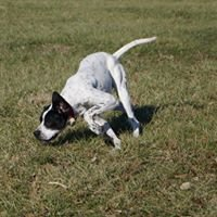 Southern Illinois Pointer and Animal Rescue
