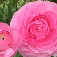 Rose Meadow Farm