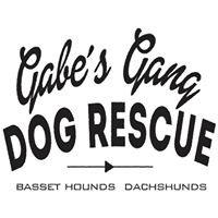 Gabe's Gang Dog Rescue