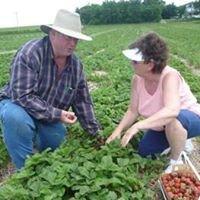 Casey's Berries / Casey's Family Farm
