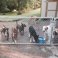 Camp Good Dog- Canine Psychology & Socialization Center